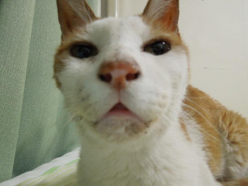 世界一の腐猫くん