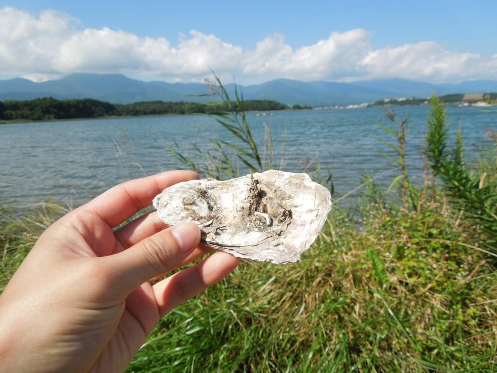牡蠣が食べたくなりました。ノロの季節みなさんお気をつけください。