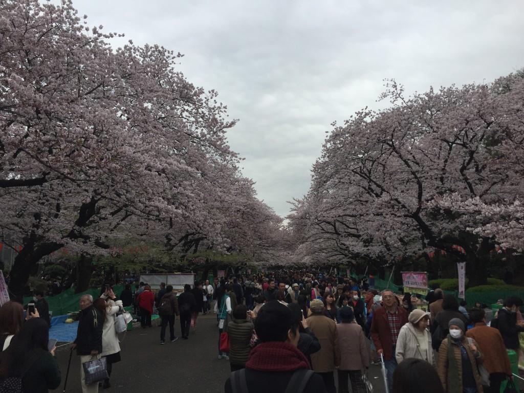 上野の並木通り!国際色が増しています!