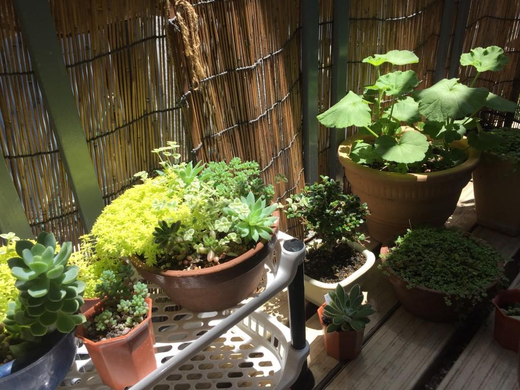 自分の身体に教養という植物を宿せ!